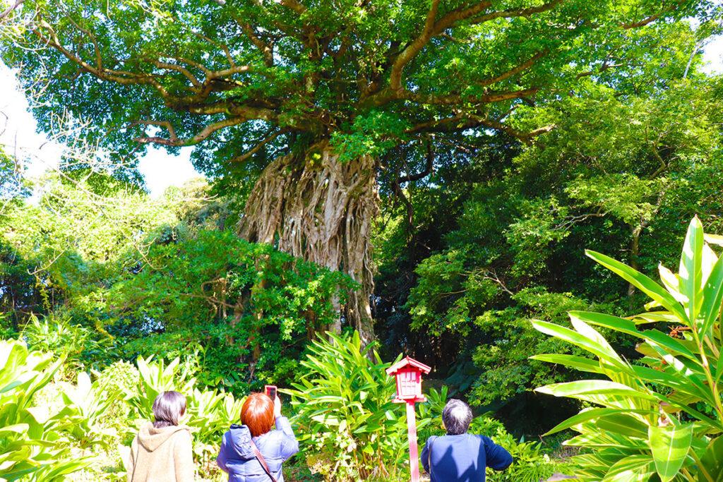 奥神社アコウの巨木